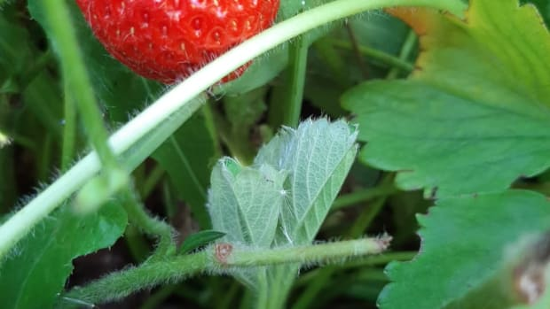 top-easy-and-low-cost-veggie-plants-that-kids-can-grow