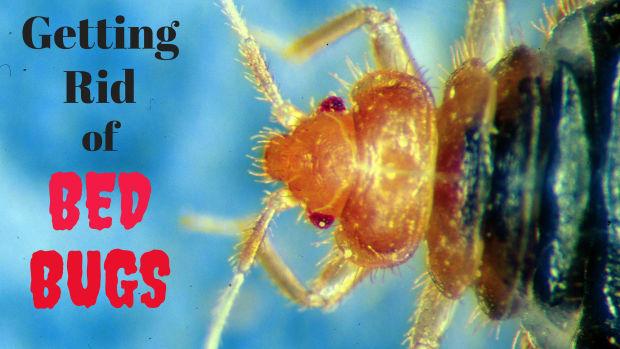 best-bedbug-extermination-tips