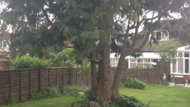 what-to-do-with-a-large-ugly-leylandii-tree-in-your-garden