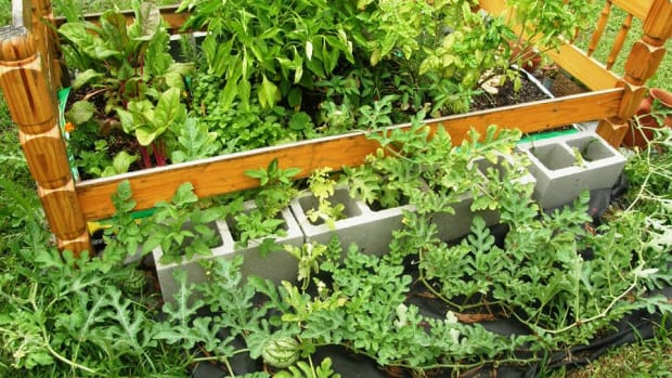 how-to-make-a-quick-and-easy-vegetable-or-flower-garden