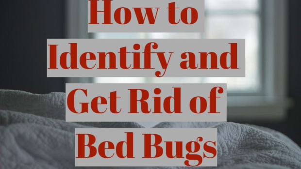 how-to-identify-and-get-rid-of-bed-bugs