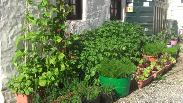 what-to-do-with-your-spent-and-used-compost