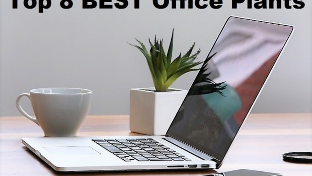 best-indoor-office-plants-low-light-and-low-maintenance