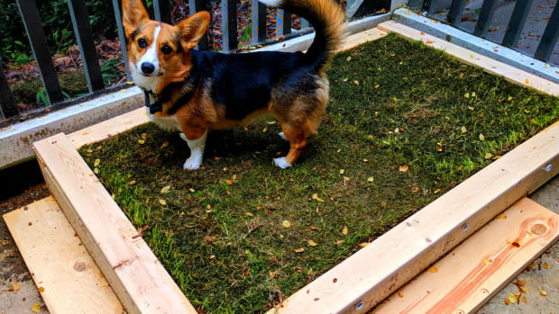 patio-diy-build-a-patio-potty-for-your-dog