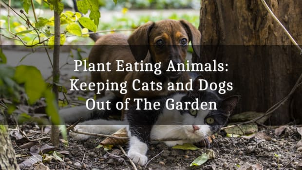 plant-eating-animals-keeping-them-out-of-the-garden-dogs-and-cats