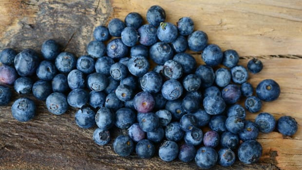 how-to-care-for-blueberry-bushes