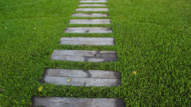 characteristics-of-a-healthy-lawn