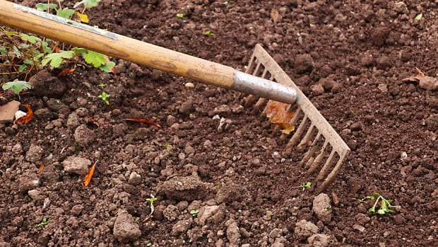 organic-tricks-for-less-weeds-in-your-garden-this-year