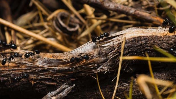 3-ingenious-ways-to-get-rid-of-ants