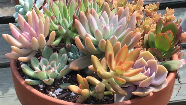 how-to-create-a-succulent-garden