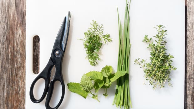 how-to-create-an-herb-garden-in-your-home