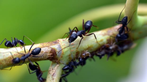 how-do-ant-traps-work