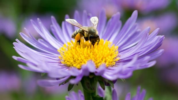 planting-your-bee-friendly-garden
