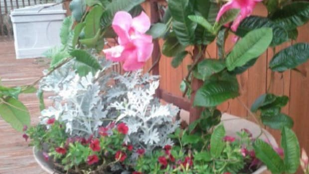 thrill-spill-and-fill-container-gardening