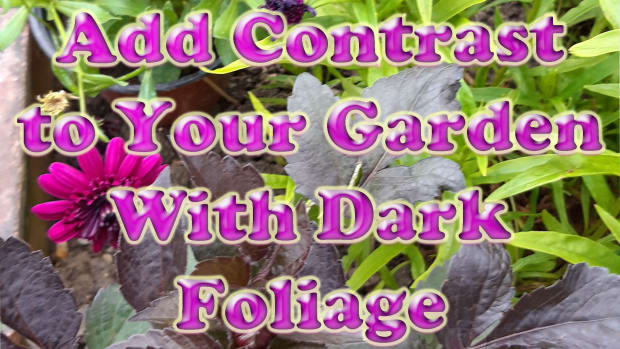 add-contrast-to-your-garden-with-dark-foliage