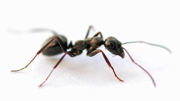keeping-common-household-bugs-away