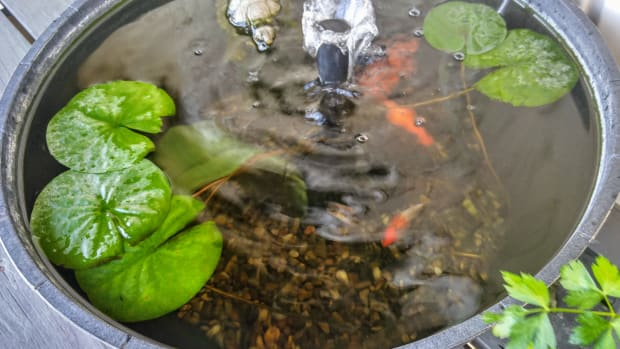 container-water-gardens
