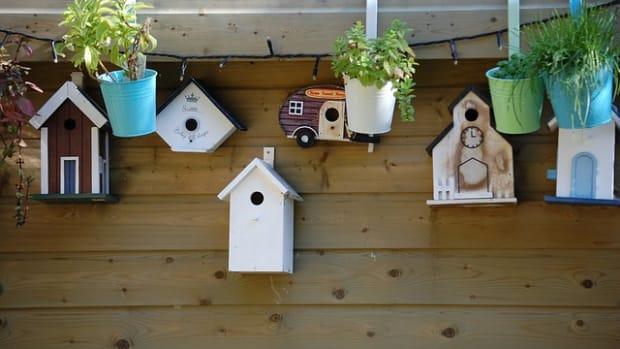 build-birdhouse-for-security-cameras