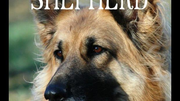 11-dogs-like-german-shepherd