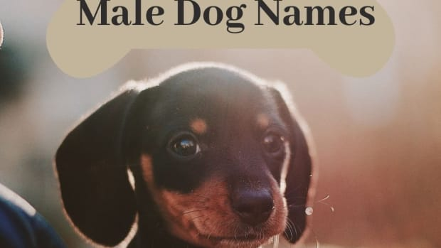 60-unique-male-dog-names-and-meanings