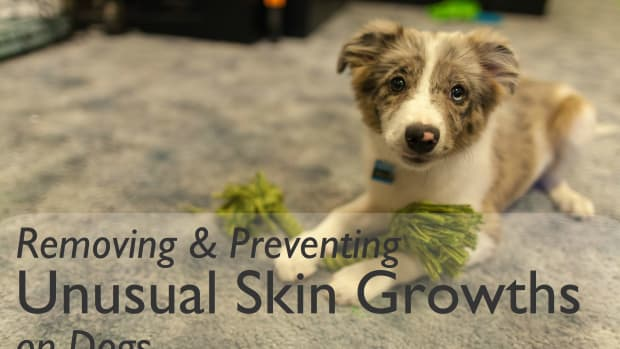 skin-tags-on-dogs-and-how-to-remove-andor-prevent-them