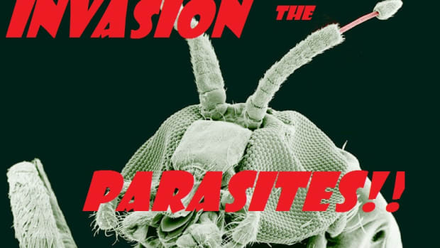 top-ten-interesting-and-fun-facts-about-parasites
