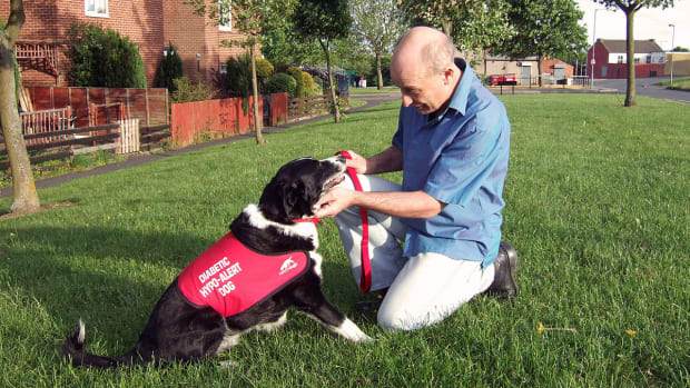 how-diabetes-alert-dogs-help-patients-manage-blood-sugar