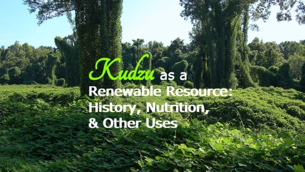 using-kudzu-as-a-renewable-resource