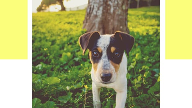 how-to-find-a-lost-or-missing-pet-dog-or-cat