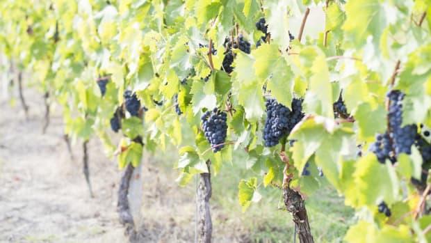 vineyard-winery-names
