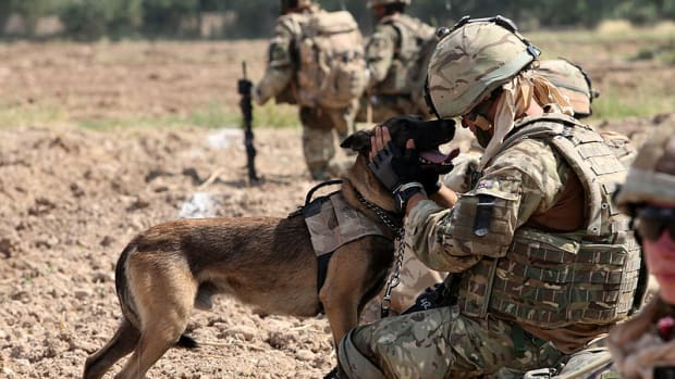 military-inspired-names-for-tough-male-dogs