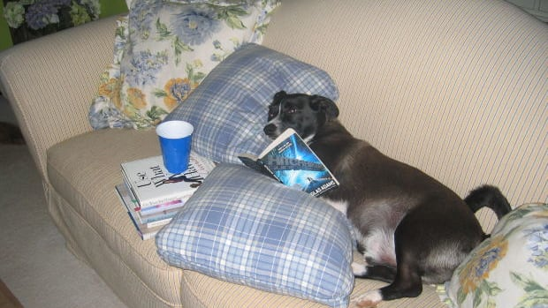 how-to-keep-your-dog-off-the-furniture