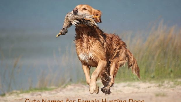 names-for-female-hunting-dogs