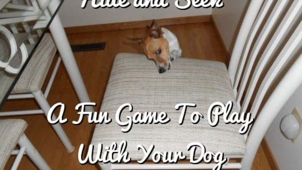 hide-and-seek-a-fun-game-to-play-with-your-dog