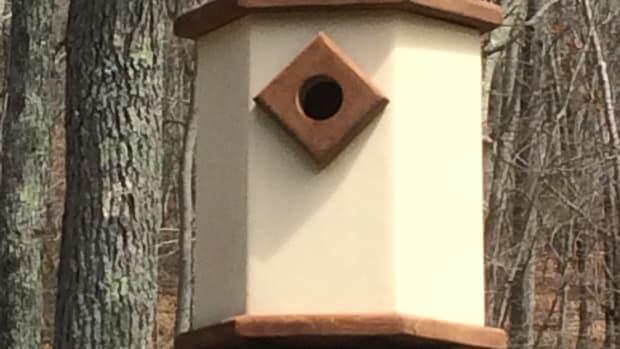 dovecote_birdhouse_plans_for_bluebirds