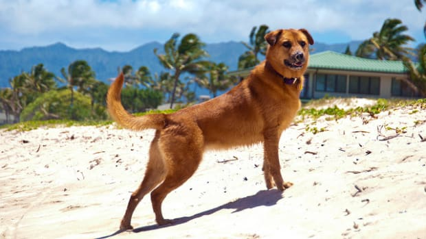 hawaiian-dog-names