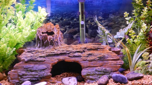cloudy-fish-tank-water-causes-and-solutions