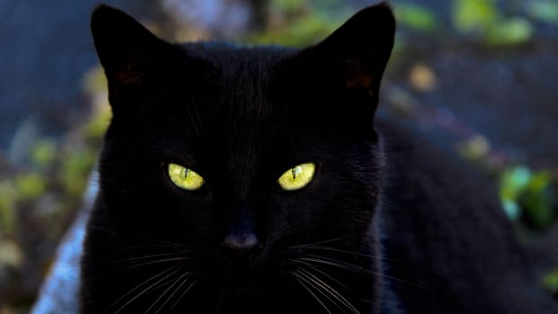 what-are-the-best-names-for-black-cats