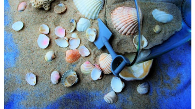 the-hobby-of-collecting-sea-shells