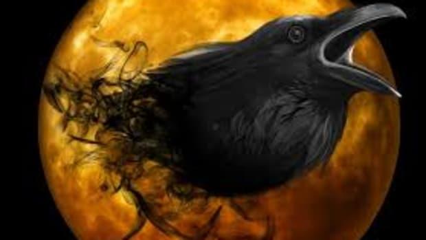 raven-bird