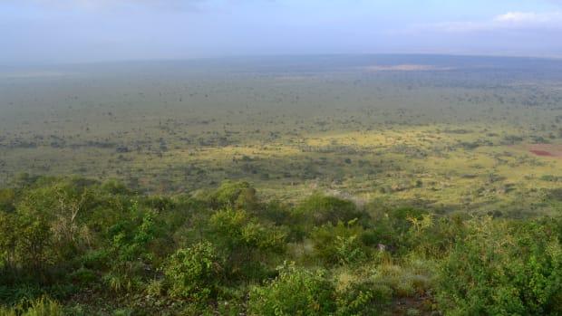 best-places-to-see-kenyan-wildlife-go-safari-kenya