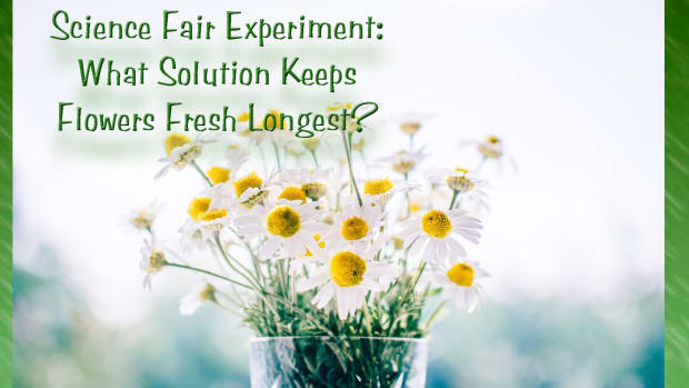 science-fair-project-what-solution-preserves-flowers-best