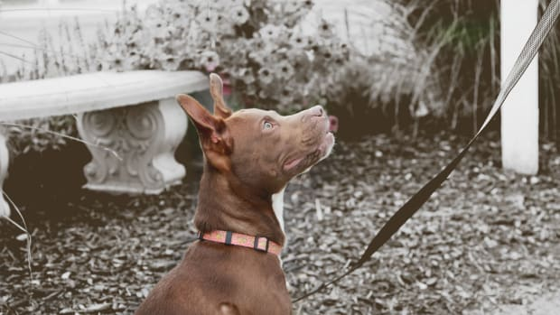 leash-training-and-why-its-important