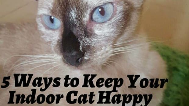 ways-to-keep-your-indoor-cat-happy
