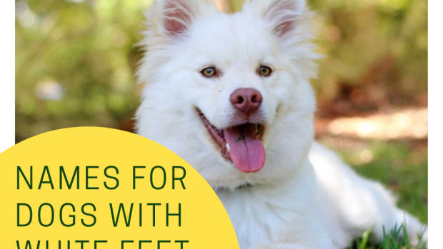 names-for-dogs-with-white-feet
