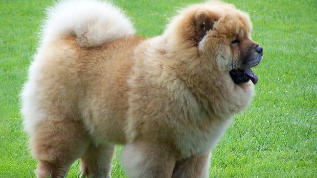 10-weird-but-wonderful-dog-breeds