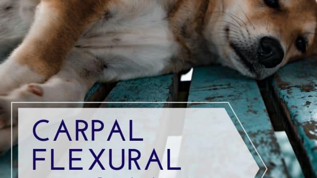 carpal-flexural-deformity-in-puppies