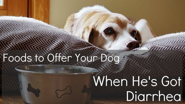 human-foods-for-dog-suffering-from-diarrhea