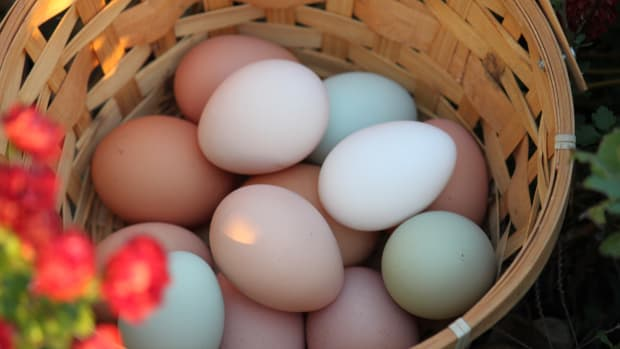 white-eggs-vs-brown-eggs