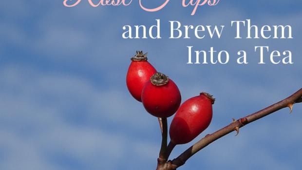 rosehip-tea-recipes